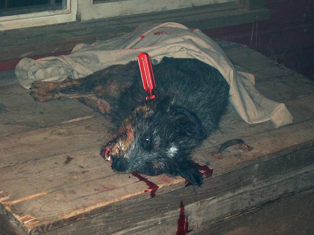 'Secret Window' fake dog for the killing scene